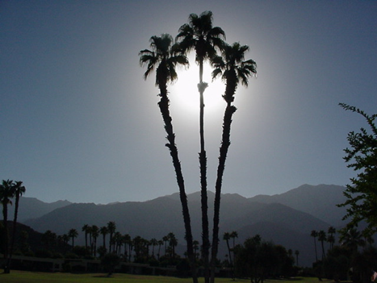 Palm Springs CA Sunshine