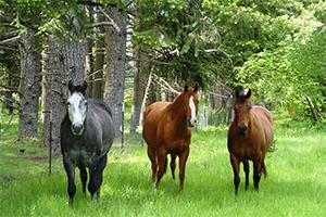 Horse Properties $350k to $500k Thurston County