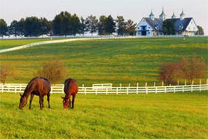 Horse Properties $500k+ Thurston County