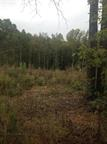 9.01 acres W Oak Hill Rd