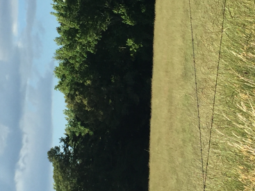 Tract 2 - 12.81 acres Cheddar Rd, Williamston, SC 29697