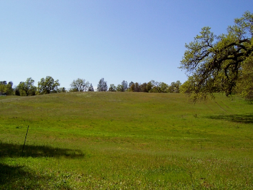 7.3 Acres, Placer Rd