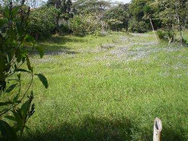 cerca de Mirador Ujarras