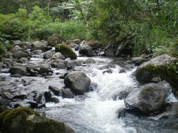 1148 Rio Jicotea