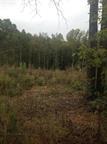 9.01 acres W Oak Hill Rd