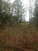 9.80 acres W Oak Hill Rd