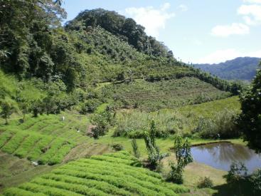10200  Mt. Araya Calle