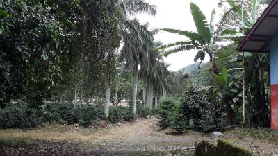 1110 Orosi to Tapanti park road
