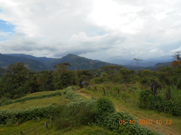 11290 La Victoria, Pejibaye,