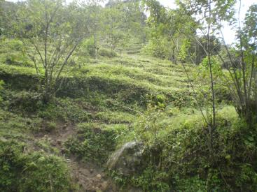 33 HA Urasca, Cachi- Orosi,
