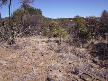 Bonney Trail