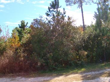 7.57 Acres Maple Rd, Ludowici, GA 31316