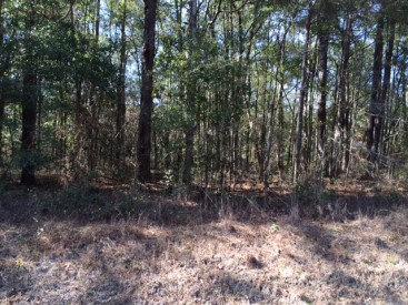 Lot 12 Deer Run Rd, Havana, FL 32333