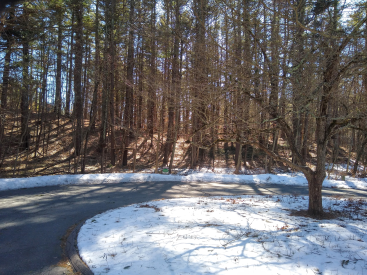 Pine Ridge Lane